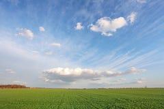 Campo verde de la primavera con el cielo azul foto de archivo