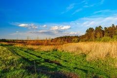 Campo verde de la primavera debajo del cielo de la tarde con las nubes Imagen de archivo libre de regalías