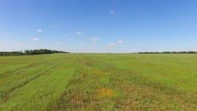 Campo verde de las flores salvajes y de la hierba, vídeo aéreo, punto de vista del abejón almacen de metraje de vídeo