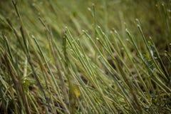 Campo verde de plantas de inclinación fotografía de archivo libre de regalías