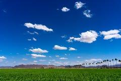 Campo verde de Sudão sob o céu azul claro imagem de stock royalty free