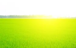 Campo verde debajo del cielo azul Fotografía de archivo