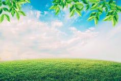 Campo verde debajo del cielo azul con las nubes y las hojas blancas Foto de archivo libre de regalías