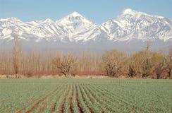 Campo verde del ajo cerca de tapas de la alta montaña Foto de archivo