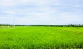 Campo verde del arroz Fotografía de archivo libre de regalías