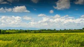 Campo verde del arroz bajo lapso de tiempo de las nubes almacen de video