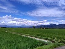Campo verde del arroz con el fondo y Bluesky de la montaña Fotografía de archivo libre de regalías