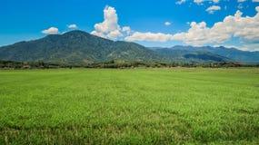 Campo verde del arroz contra las nubes del blanco del cielo de las colinas Fotos de archivo