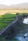 Campo verde del arroz en Chiang Rai, Tailandia Imagen de archivo