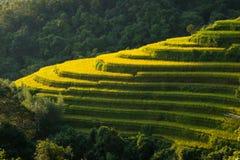 Campo verde del arroz en el sol Foto de archivo libre de regalías