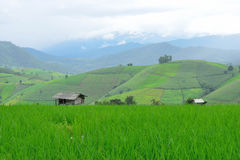 Campo verde del arroz en montaña Foto de archivo libre de regalías