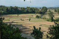 Campo verde del arroz en Pua Fotografía de archivo libre de regalías