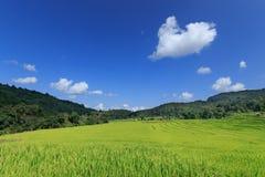Campo verde del arroz encima de la montaña Foto de archivo libre de regalías