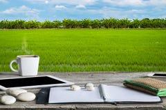 Campo verde del arroz por completo de los campos del arroz imagen de archivo