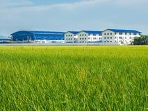 Campo verde del arroz y fábrica agrícola en país en vías de desarrollo imagen de archivo