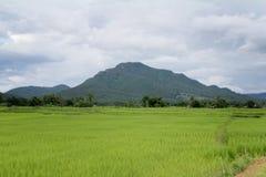 Campo verde del arroz y la montaña Foto de archivo libre de regalías
