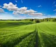 Campo verde del centeno Imágenes de archivo libres de regalías