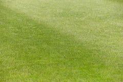 Campo verde del fútbol y del rugbi con el detalle recientemente cortado de la hierba Fotografía de archivo libre de regalías