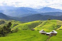Campo verde del terrazzo del riso e cielo nuvoloso nella stagione delle pioggie Immagini Stock Libere da Diritti