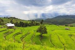 Campo verde del terrazzo del riso e cielo nuvoloso nella stagione delle pioggie Immagine Stock Libera da Diritti