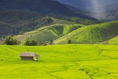 Campo verde del terrazzo del riso e cielo nuvoloso nella stagione delle pioggie Fotografia Stock Libera da Diritti
