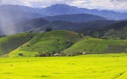 Campo verde del terrazzo del riso e cielo nuvoloso nella stagione delle pioggie Fotografie Stock Libere da Diritti