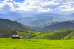 Campo verde del terrazzo del riso e cielo nuvoloso nella stagione delle pioggie Fotografia Stock