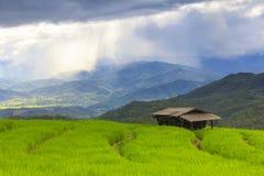 Campo verde del terrazzo del riso e cielo nuvoloso nella stagione delle pioggie Immagini Stock