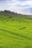 Campo verde del terrazzo del riso e cielo nuvoloso nella stagione delle pioggie Immagine Stock