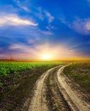 Campo verde del trigo, del cielo azul y del sol, nubes blancas. país de las maravillas Fotografía de archivo libre de regalías