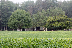 Campo verde del verano Fotos de archivo