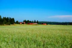 Campo verde dell'avena il giorno di estate Fotografie Stock Libere da Diritti