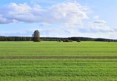 Campo verde dell'azienda agricola Fotografia Stock Libera da Diritti