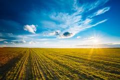 Campo verde dell'orzo, primavera in anticipo Priorità bassa agricola immagini stock