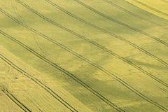 Campo verde della semina Fotografia Stock