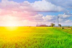 Campo verde di agricoltura con la centrale elettrica di industria Immagine Stock Libera da Diritti