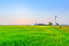 Campo verde di agricoltura con la centrale elettrica di industria fotografia stock