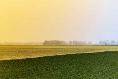 Campo verde di agricoltura nel primo mattino Natura rurale nella terra dell'azienda agricola Paglia sul prato Raccolto dorato gia fotografia stock