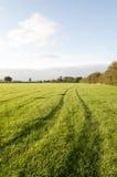 Campo verde di azienda agricola Fotografie Stock Libere da Diritti