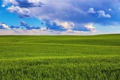 Campo verde di estate fotografie stock