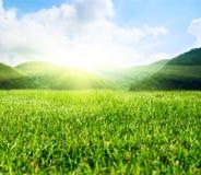 Campo verde di estate immagini stock
