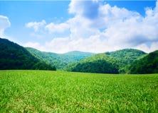 Campo verde di estate immagini stock libere da diritti
