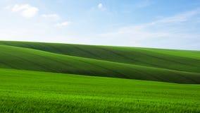 Campo verde di giovane grano con le tracce di trattore in Moravian immagini stock libere da diritti