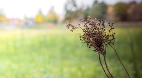Campo verde di inverno Fotografia Stock