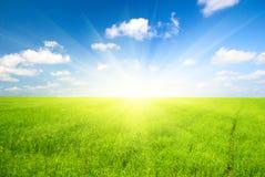 Campo verde di lino Immagine Stock