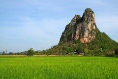 Campo verde disponibile in Tailandia Fotografia Stock Libera da Diritti