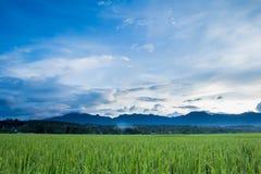 Campo verde do arroz imagem de stock