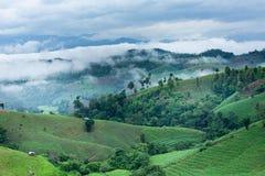 Campo verde do arroz Foto de Stock