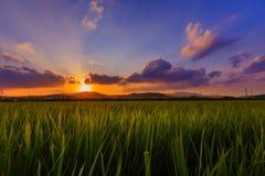 Campo verde do arroz Fotografia de Stock