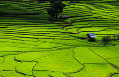 Campo verde do arroz dos terraços, uma beleza natural bonita na montanha em Nan, Khun Nan Rice Terraces, Boklua Nan Province, Tai Imagem de Stock Royalty Free